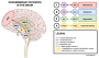 meds:antipsychotics:dopaminergic_pathways_of_the_brain_vertical_v3.png