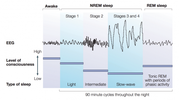 Stages of Sleep with Polysomnograph Recordings